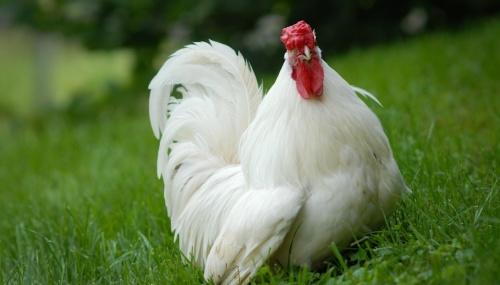 Halal Vegetarianism