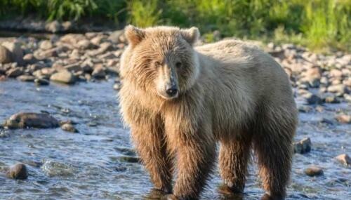 Bear-Baiting Is Un-Islamic