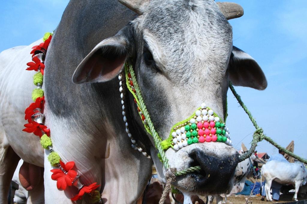 Decorated Bull