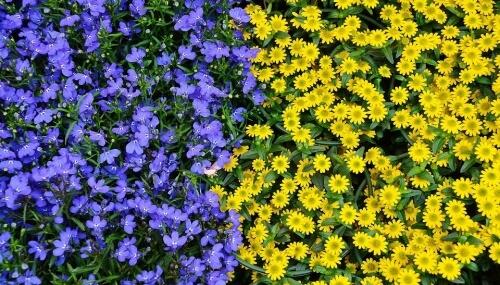 Do Plants Feel Pain?