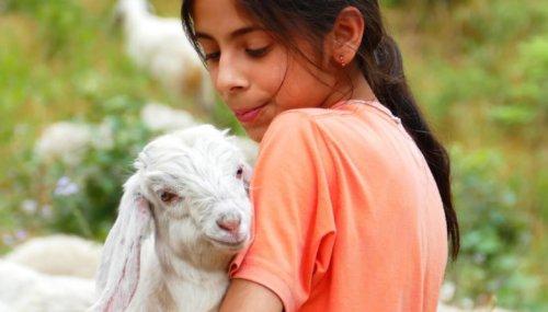 Peace and Compassion on Eid al-Fitr