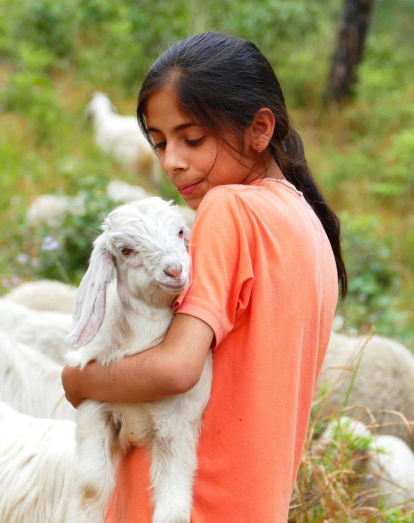 Child holding lamb