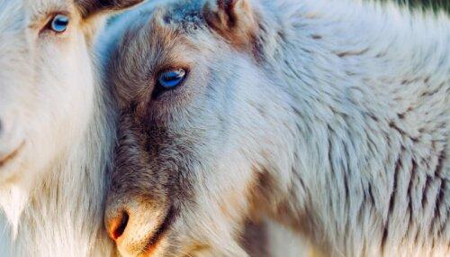"""VIDEO: IAAPEA Presents """"Creatures of God"""""""
